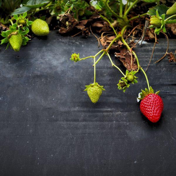 5 modi per gestire gli errori alimentari