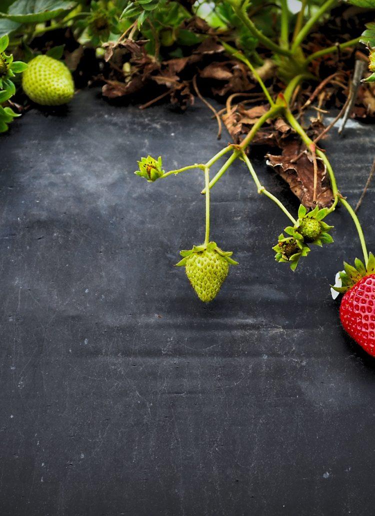 Mangiare sano - consulenza macrobiotica