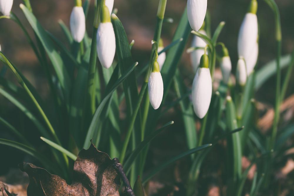 cambio di stagione e depurazione - dieta macrobiotica